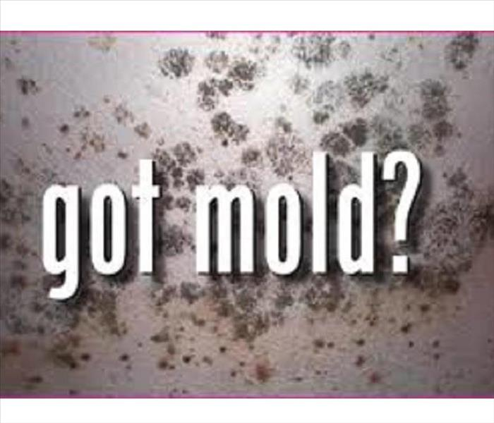 Mold Remediation Does Your Lexington Home Have A Mold Problem?